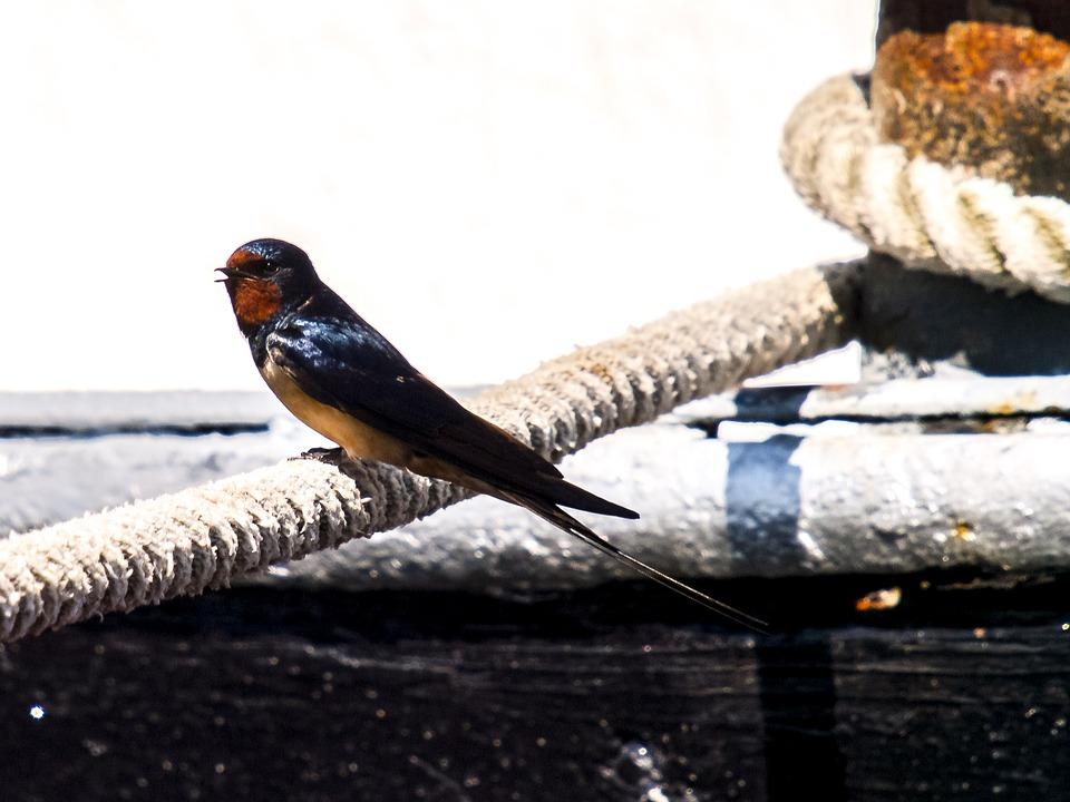 Wunderbar Blaue Vogel Färbung Seite Galerie - Druckbare Malvorlagen ...